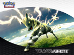 Pokémon TCG: Black & White Zebstrika Wallpaper